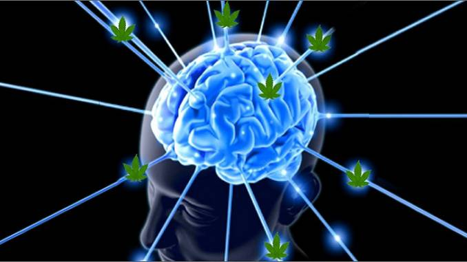 Brain Marijuana Cannabis Min 678x381 2